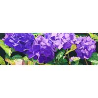 Purple Mopheads
